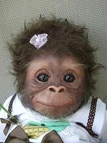 Jedna z piękniejszych małpe...