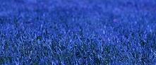 Niebieska trawa  Napisał brat Patefon  Ostatnio liturgia Słowa obchodzi się z...