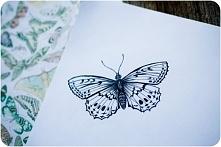 Piękny motyl narysowany cienkopisem