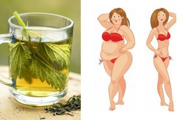 WYSZCZUPLAJĄCY napój pokrzywowo-cytrynowy! Herbata - pokrzywa Składniki: 3 torebki ekspresowej herbaty - pokrzywy; szklanka wrzątku; 2 litry wody przegotowanej/przefiltrowanej; sok z cytryny (przynajmniej z jednej); opcjonalnie: miód lub cukier. Przygotowanie: torebki pokrzywy zalej szklanką wrzącej wody. Pozwól herbacie się zaparzyć. Kiedy nieco przestygnie, przelej pokrzywę do 2 litrów wody. Dodaj sok z cytryny (wedle upodobań) i miód. Napój najlepiej smakuje schłodzony, dlatego warto pozostawić go na godzinę w chłodnym miejscu, a nawet – w lodówce. Pity rano na czczo dodatkowo przyśpiesza przemianę materii. Polecamy! :)