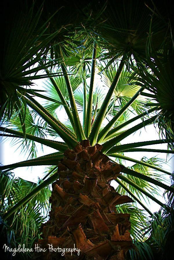Pod palmą.