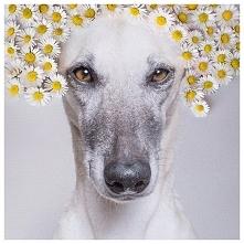 zwierzęta, pies, kwiaty