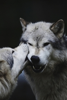 wonderful wolves ♡♡