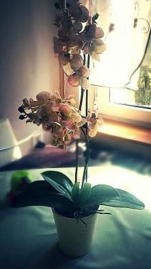 sztuczny storczyk zapraszam na fb: Storczyki-handmade-1039673286080392/