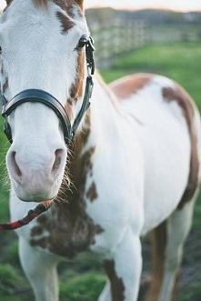 konieł <3