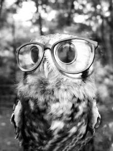 <Owl>