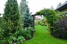 Marzę o zielonym ogrodzie.....