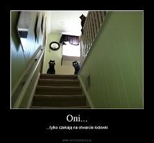ehh te koty...też to znam :P wredne kocury ;)