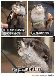 Chciwa wydra