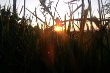 Zachód słońca *-*