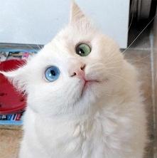 Ten kot ma najbardziej hipnotyzujące oczy świata. Wow!