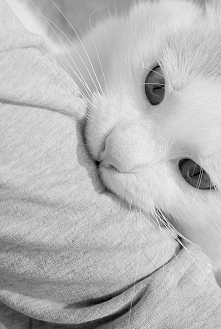Mój kot Dyzio :)