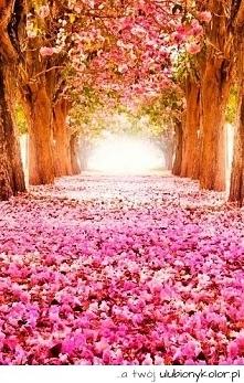 piękne drzewa *o*