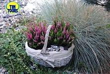 Koszyk wiklinowy w roli osłony na wrzos. Urocza dekoracja ogrodu!