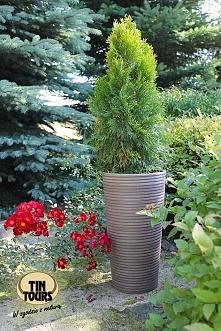 Designerska, nowoczesna, ekologiczna donica do ogrodu z materiałów wtórnych: plastiku, drewna i kamienia. Może stać na zewnątrz przez cały rok. Jest odporna na czynniki atmosfer...