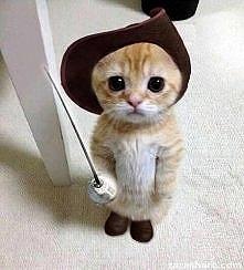 Jaki słodki kot w butach.