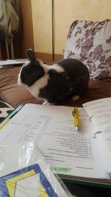 Kica uczy sie rachunkowości :)