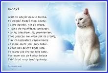 ku pamięci wszystkich ukochanych kotów