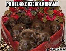 Z chęcią się poczęstuję ;)