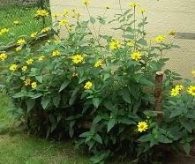 kwiatki ogrodowe :)
