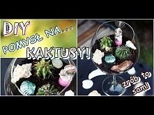 DIY - pomysł na KAKTUSY! Sadzenie kwiatów inaczej