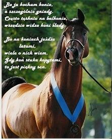 Bo ja kocham konie....