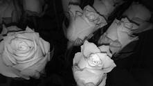 """""""Nawet z betonu czasem róża wyrasta."""""""