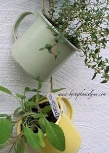 jak wam się podoba?  szukam pomysłu na wiszące zioła. ...