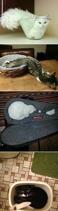 zwierzęta, kot