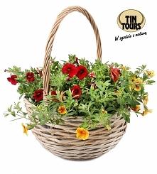 Szary wiklinowy koszyk z pałąkiem na kwiaty ładnie ozdobi każde miejsce w domu i na balkonie.