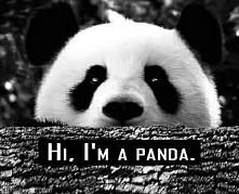 Hi, I'm a Panda. *_*