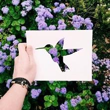 Koliber przypomina mi kosogłosa nie wiem czemu xd )