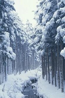 Oby tej zimy było jak najwięcej śniegu ♡