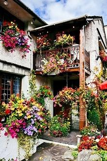 Tyle kwiatów