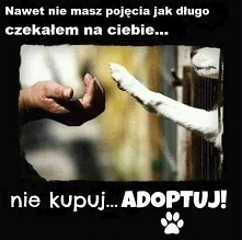 nie kupuj adoptuj!!!