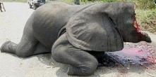 Możesz zignorować, lecz wiedz co się dzieje! Powstrzymajmy rzez słoni!!! Podp...