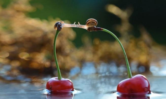 Ślimacza miłość ;))