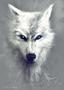 biały wilk