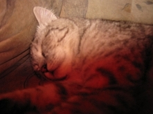 Mój kotek :)