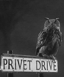 Privet Drive