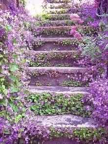 Kwiatowe schody