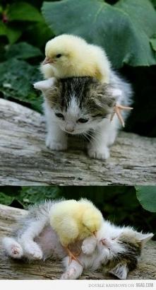 Słodki kotek i pisklę :)