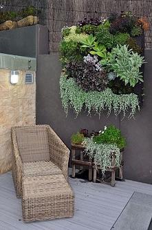 wiszące roślinki