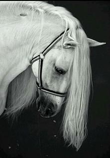 Horse Horse Horse *.*