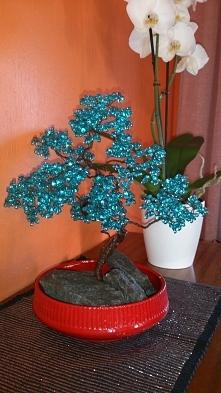 drzewko szczęścia bonsai z ...