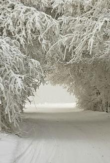 Śnieżny łuk