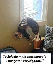 Koteł^^
