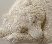 Wygląda jak śpiący niedźwiedź polarny. Ale gdy dowiedziałem się, co to napraw...