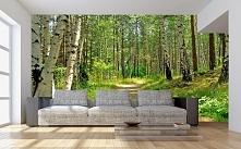 Las brzozowy w Twoim domu