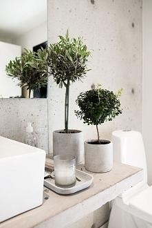 dekoracyjne drzewka w łazie...